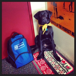 """Backpack is packed. Bandana is tied. Time to go to class!"""